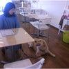 高崎市・藤岡市・安中市 犬のしつけ ドッグカフェ単独訓練の画像
