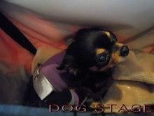 HAPPY DOGSTAGE LIFE!!