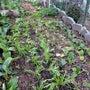 悪条件で作る野菜選び