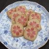 芝桜の彩の画像