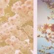 桜の開花予報