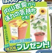 内山家具 スタッフブログ-himawari201203