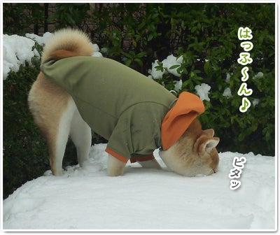 あたち柴犬 抹茶だヨ!  - 伊賀忍者柴犬の道 --120303_p18白い穴がいっぱい