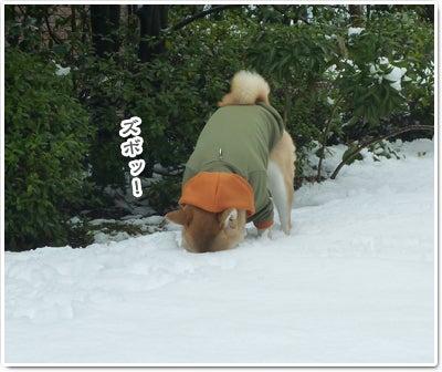 あたち柴犬 抹茶だヨ!  - 伊賀忍者柴犬の道 --120303_p17白い穴がいっぱい