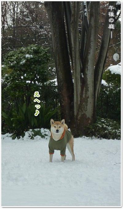 あたち柴犬 抹茶だヨ!  - 伊賀忍者柴犬の道 --120303_p16白い穴がいっぱい