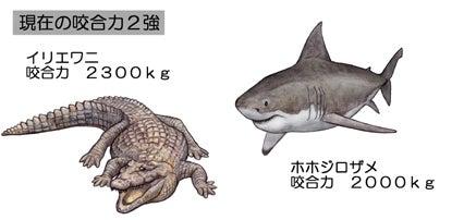 川崎悟司 オフィシャルブログ 古世界の住人 Powered by Ameba-現生動物咬合力2強