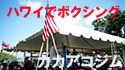 BOXING MASTER/ボクシング マスター-カカアコジム125