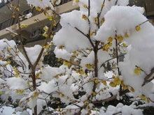 またまたすごい雪です。