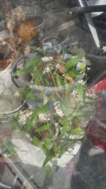 凛と空に咲く-2012030611370001.jpg