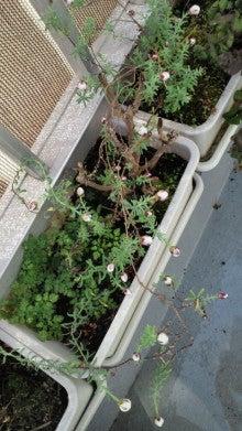 凛と空に咲く-2012030611350000.jpg