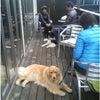 伊勢崎市 犬のしつけ 合同訓練(ドッグカフェ・アンディーハウス)の画像