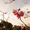 ウォーキング・マントラヨガ in 緑地公園 (3/18)の画像
