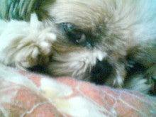 かわいこ犬日記-201203071429.jpg