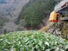 若き茶農家きちゃきちゃのブログ