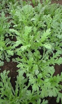 川田農園 ブログ-120309_0845~0002.jpg