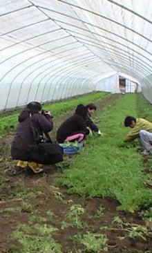 川田農園 ブログ-120309_0832~0002.jpg