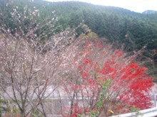 自然、戦跡、ときどき龍馬-紅葉と桜
