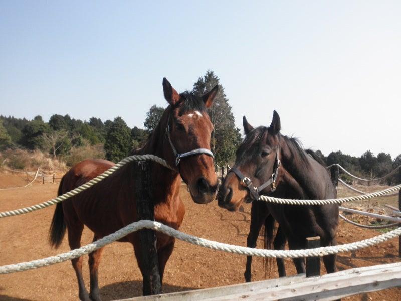 馬を愛する男のブログ Ebosikogen Horse Park-ユキとピーター