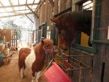 馬を愛する男のブログ Ebosikogen Horse Park-タモリの挨拶 ユキ
