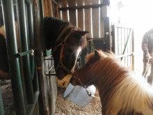 馬を愛する男のブログ Ebosikogen Horse Park-タモリの挨拶 キク