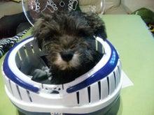 Penchan's Igloo-2012_02_03