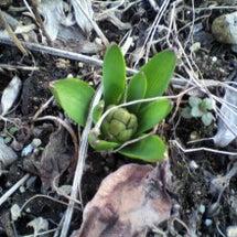 そろそろ春だな