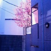 梅の木が…