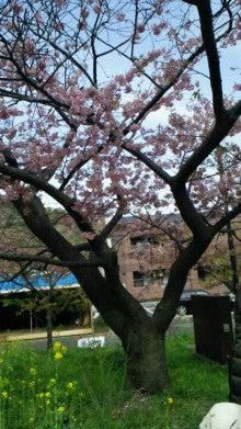 凛と空に咲く-2012031914260000.jpg