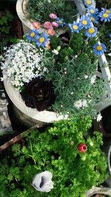 凛と空に咲く-2012032214070000.jpg
