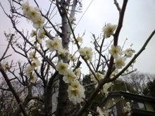内山家具 スタッフブログ-20120323うめ