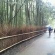 嵐山散策♪