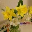 春。クロッカス、水仙…