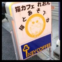 猫カフェへ…初来店。