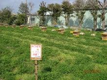 今季養蜂開始