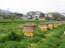 今季養蜂開始3