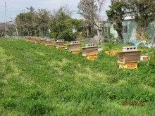 今季養蜂開始2