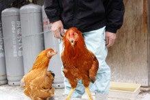 大将の味わい日記-大和肉鶏