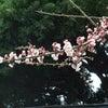 春はそこまでの画像