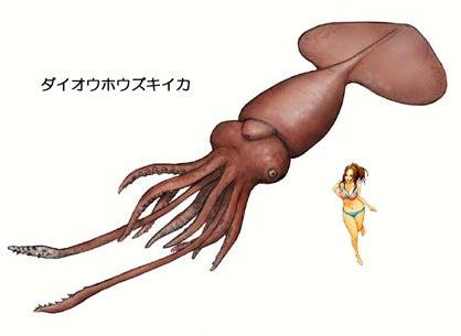 川崎悟司 オフィシャルブログ 古世界の住人 Powered by Ameba-ダイオウホウズキイカ