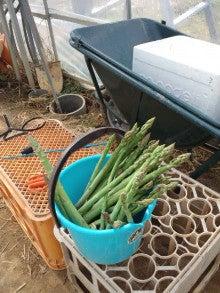 はるうた農園作業日誌-収穫