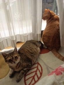 two nyan life☆-120326_121128.jpg