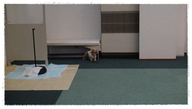 旅犬Lani&Leaのほほん風船記-HOTEL Lien