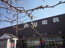 内山家具 スタッフブログ-20120327さくら