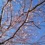 春の陽気だね~♪