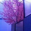 梅の木が(*^_^*…