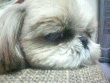 かわいこ犬日記-201203021643.jpg