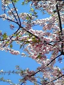 milkusausaさんのブログ-120329_1027~02.JPG