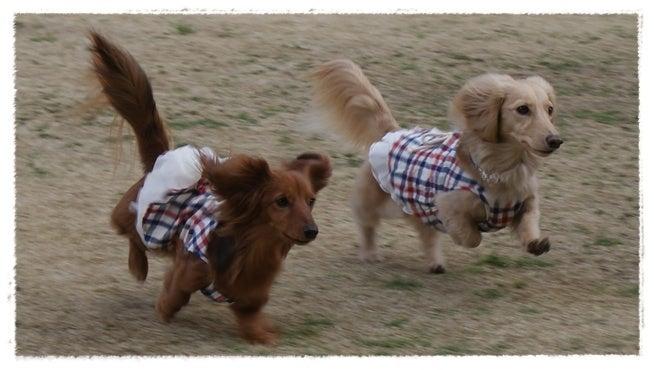 旅犬Lani&Leaのほほん風船記-春の房総旅行☆ひめはるの里de❤ランランラン♪
