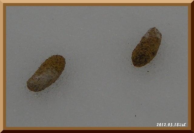 ロフトで綴る山と山スキー-0318_0857