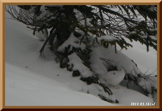 ロフトで綴る山と山スキー-0318_0820